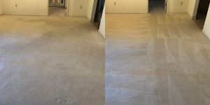 Driganic Carpet Cleaning Services in Springfield PA,